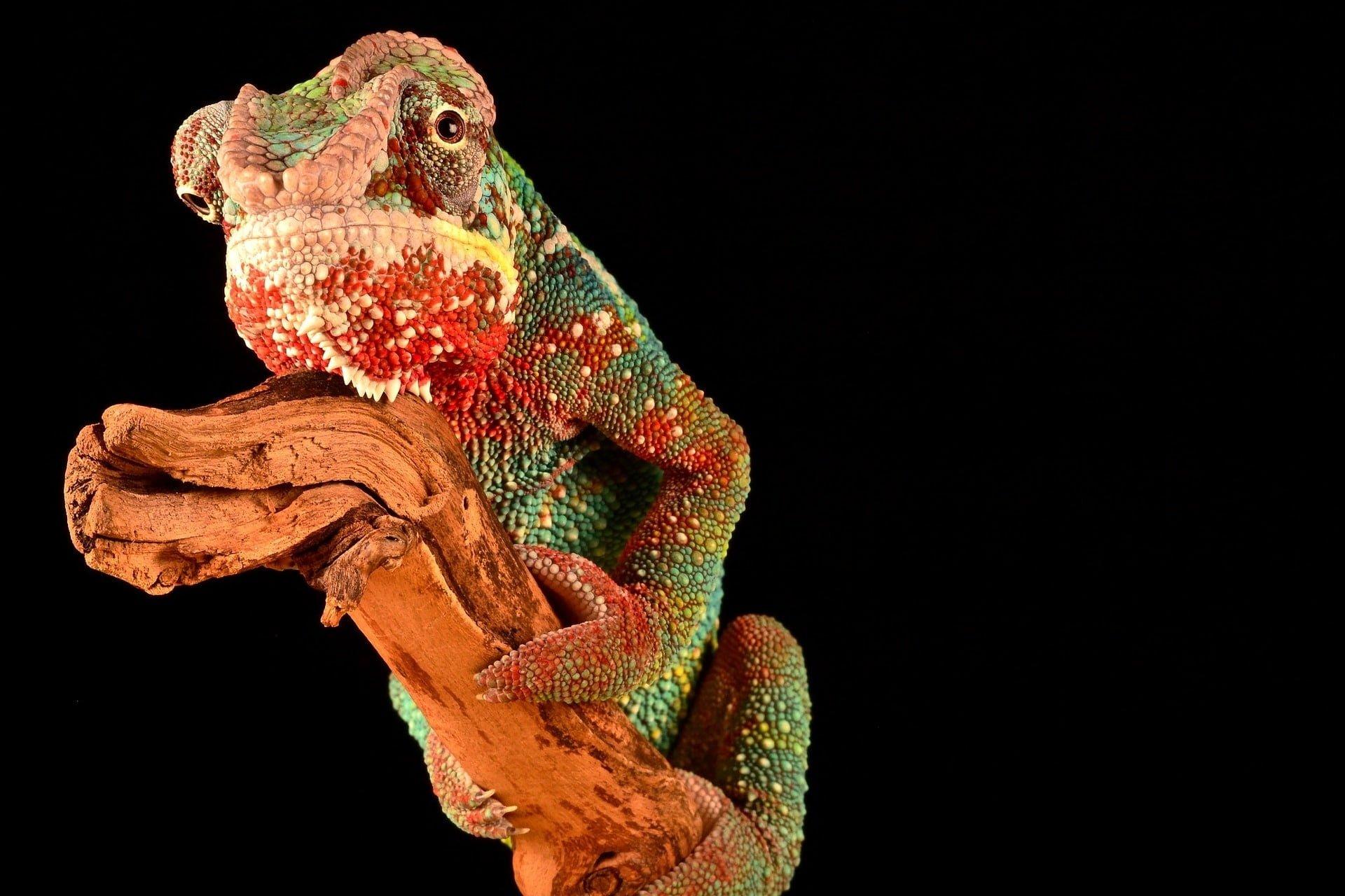 Le caméléon quand il veut connaître sa véritable nature, se pose sur le vide...
